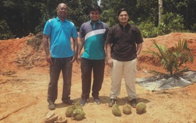Durian Farm Project