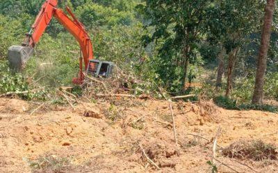 Durian Farm Project Progress