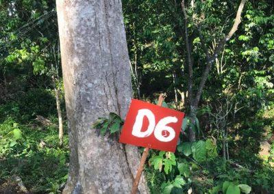 update Jun 2020_durian progress 15