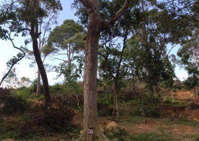 update Jun 2020_durian progress 17